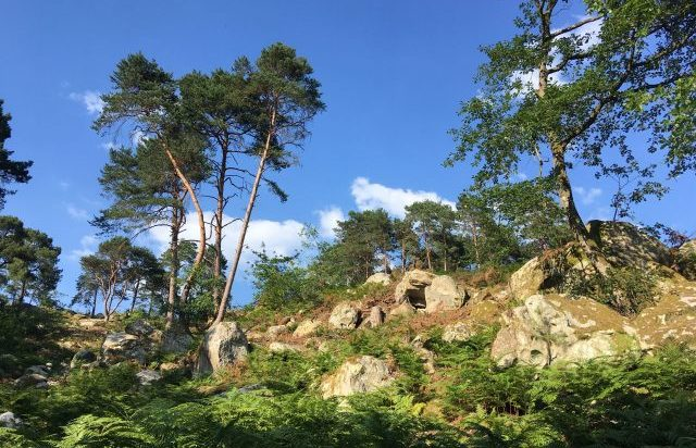 visite guidée privée fontainebleau private guided tour guide privé forêt